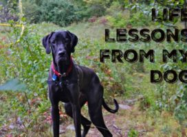 Life Lessons I learnt from my Dog. To know what they are have a look here!