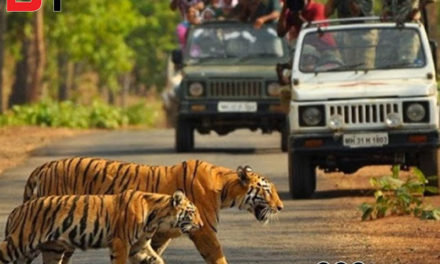 Bandhavgarh, a thrill and adventure for some but daily lease of new life for the people living there